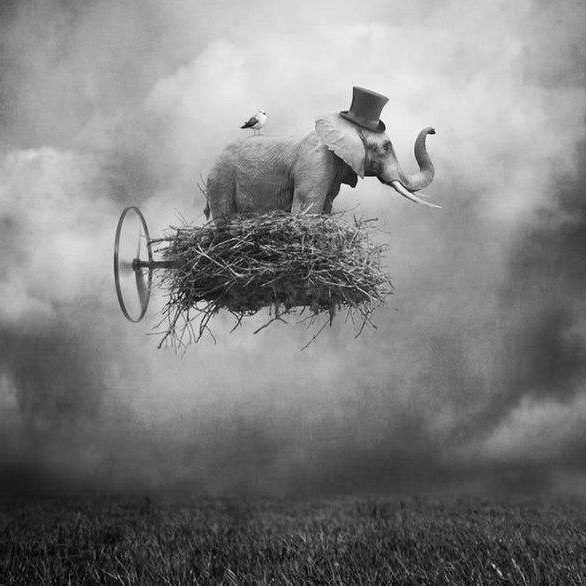 Слон с Пропеллером